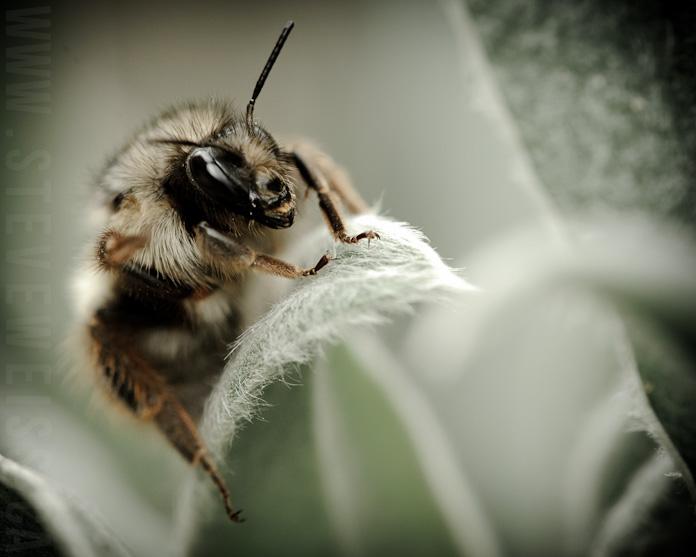 macro bee (5)